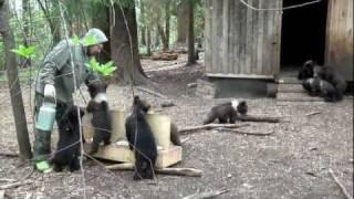 Пажетнов Вася и медвежата Pazhetnov Vasya & bear cubs