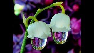 Descargar Mp3 De Flores Del Mundo Gratis Buentema Org