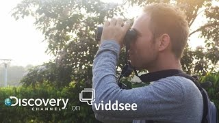 Man Vs. Birds - To Catch The Bird, You Must First BE The Bird // Discovery on Viddsee