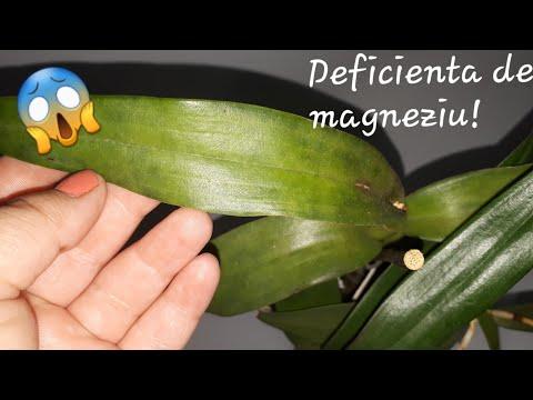Condroitină și unguent glucozamină Preț