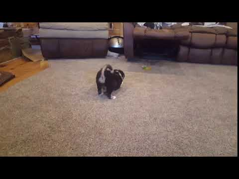 This is a video of Rider playing fetch.