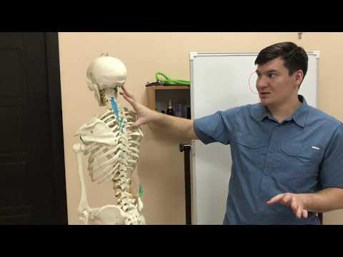 Нестабильность суставов и плоскостопие не связаны со слабостью мышц как принято считать