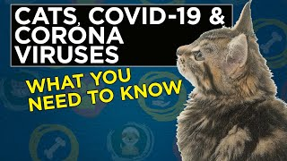 Coronavirus and COVID-19 in Cats, Can my cat get Covid19?
