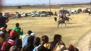 preview picture of video 'encierro en cabezuela 2013'