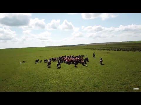 Colonia Aníbal Sampayo, Paysandú: grupo ganadero Paso de los Carros