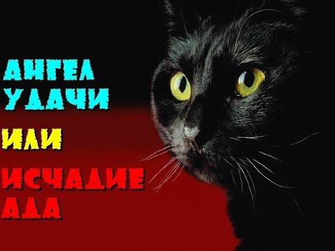 Черная кошка. Ангел удачи или исчадие ада
