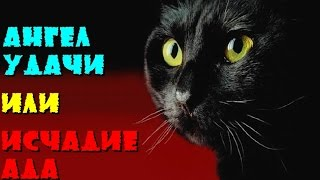 Что несут черные коты в дом