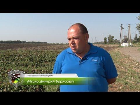 Отзыв о продукции ЭКОСС от главного агронома УчХоза КубГАУ