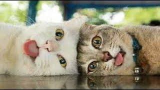 Прикольные животные!!!