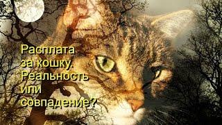 Расплата за кошку  Реальность или совпадение