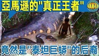 """【探秘】太可怕了:亞馬遜的真正王者    竟是""""泰坦巨蟒""""後裔   看完嚇尿!"""