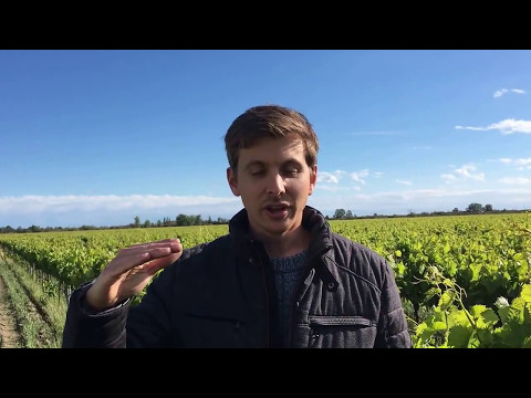 Guillaume Gaches, responsable technique du vignoble Le Pive en Camargue