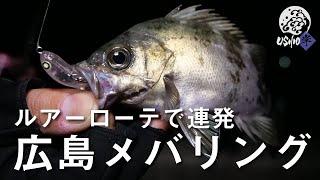 【USHIO岸】表層で数釣り、ボトムでサイズアップ!広島メバリングゲーム / 村上祥悟 去川直稔