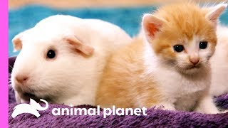 INOpets.com Anything for Pets Parents & Their Pets