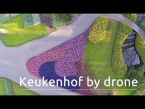 Keukenhof, The World's Biggest Flower Garden, Filmed With A Drone