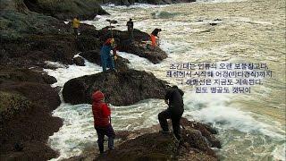 [다큐 Alive Island2-1]04 갱번, 독살, 조간대의 비밀