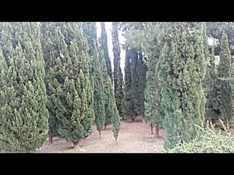 Gimnastica de dimineata in legume varicoase