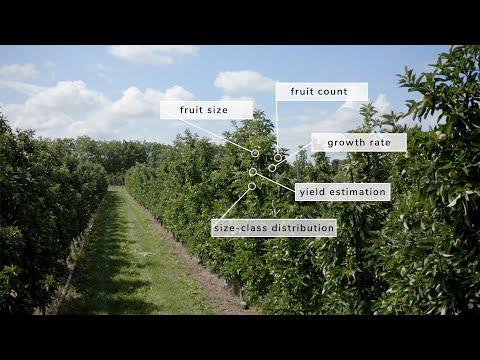 Pixofarm aplikacija koja broji i mjeri voće na stablu