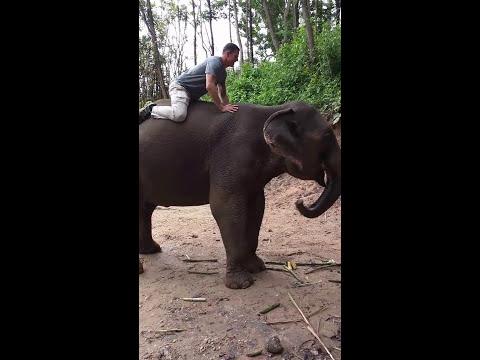 Лицеви опори върху гърба на слон (ВИДЕО)