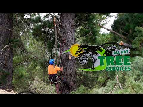 All Day Tree Services - Advertising Video