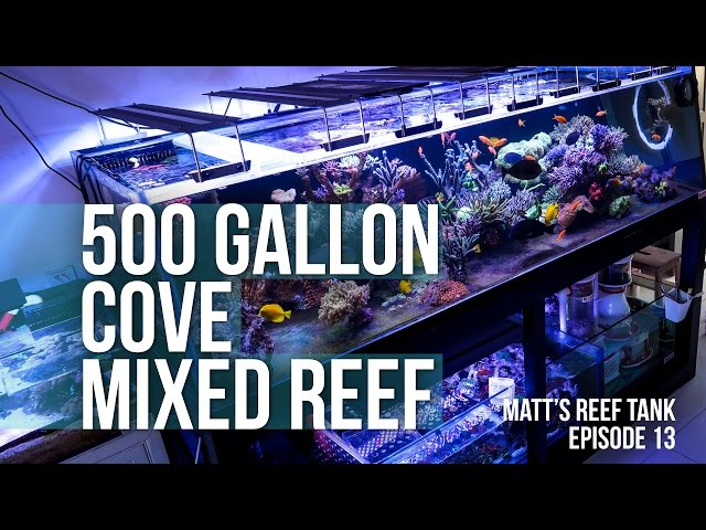 500 GALLON COVE REEF TANK | MATT's REEF TANK