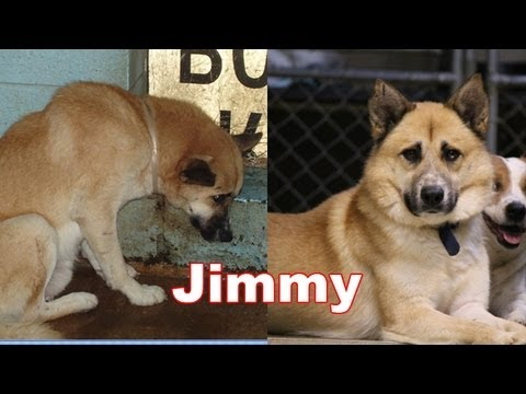 Amazing Transformation of a Shelter Pet  – The Story of Jimmy. Adopt Rescue Foster