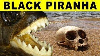 BIGGEST PIRANHA - Amazon River Monsters