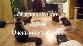 VLOG: Дубай/Куда сходить в Дубае/Кафе с котами - Ailuromania