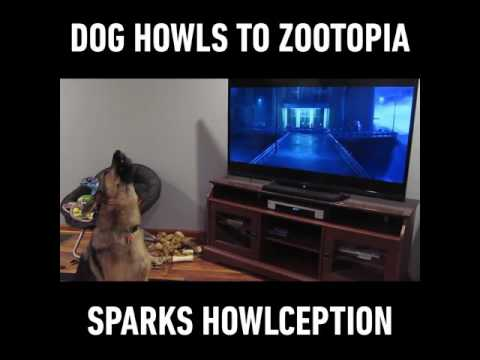 Dogs Howling To Zootopia Howl #howlception