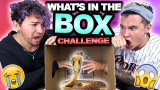 WHAT'S IN THE BOX CHALLENGE (HUGE FREAKOUT)