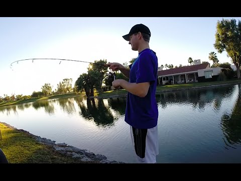 Golf Course Pond Fishing for Bass
