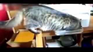 Смотреть приколы про кошек и котов  Скачать приколы про кошек
