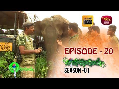 Sobadhara  | Season - 01 | Episode 20 | Sobadhara Rupavahini