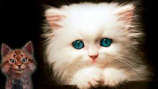 Наука для детей Животные | Кошка | Семен Ученый