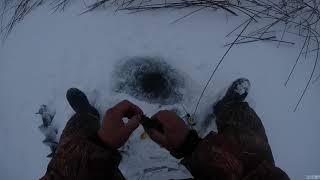 Отчеты о рыбалки тюмень