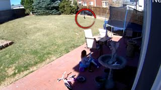 5-Year-Old Girl Stares Down Bobcat in Her Backyard