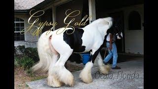 Gypsy Gold Farm - Ocala, FL. - Family of 6 living fulltime in an RV