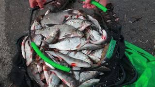 Все о английской донной рыбалки