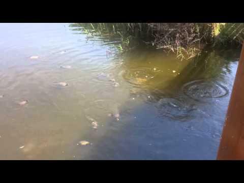 Come fare un semolino per pescare nella siringa