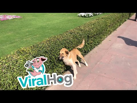 כלב שאוהב להתחכך בשיחים