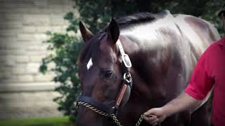Gulfstream Park Replay Show | March 22, 2019