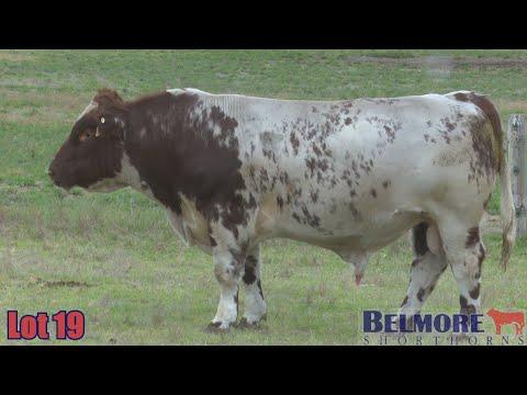BELMORE KEEPER Q161