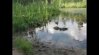 Рыбалка на озере михайловский пруд крюково