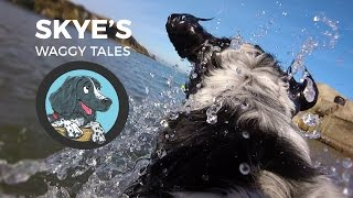 Skye's Waggy Tales Official - Springer Spaniel Children's Books
