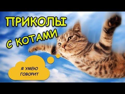 Лучшие и самые смешные приколы с котами и кошками Говорящий кот