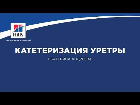"Вебинар на тему: ""Катетеризация уретры"". Лектор - Екатерина Андреева"