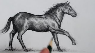 How to Draw a Horse: Step by Step
