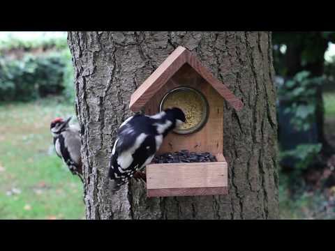 Peanut Butter Feeders for Wild Birds