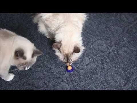 ПРЫГ СКОК -лизун для котов с витаминами!))