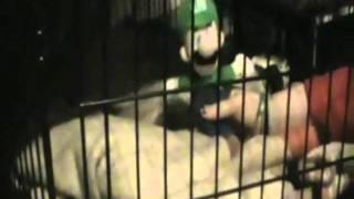 Mario And Luigi Shorts! Episode 8 ~Coconut~